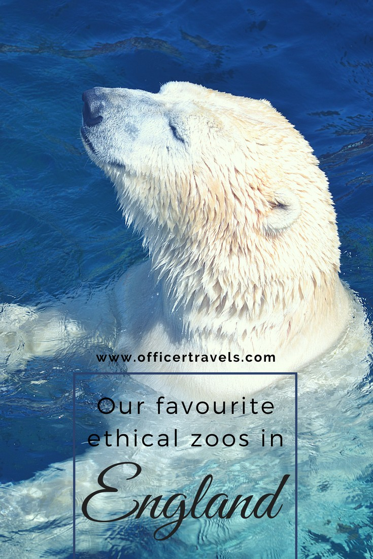 Here's our list of favourite ethical zoos in England that are an absolute must if you're in the area. Conservation is at the top of their priorities as well as rescuing animals in need. Find out which zoos and reserves we visit on a regular basis, and why we think you should too