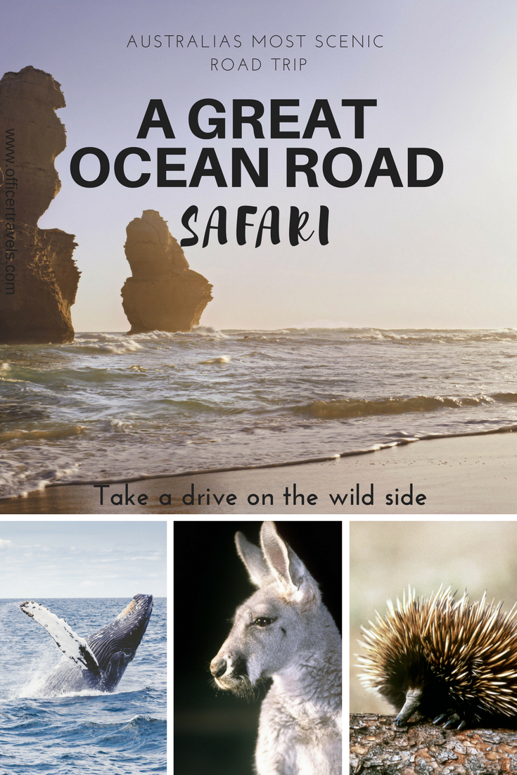 The Great Ocean Road is a must do road trip from Melbourne, we drove the coast right up to Adelaide and want to share our itinerary with you! | #greatoceanroad #melbourne #roadtrip #australia