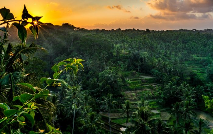 Reflecting on a year of travel in ubud Bali sunset desktop background for MAC