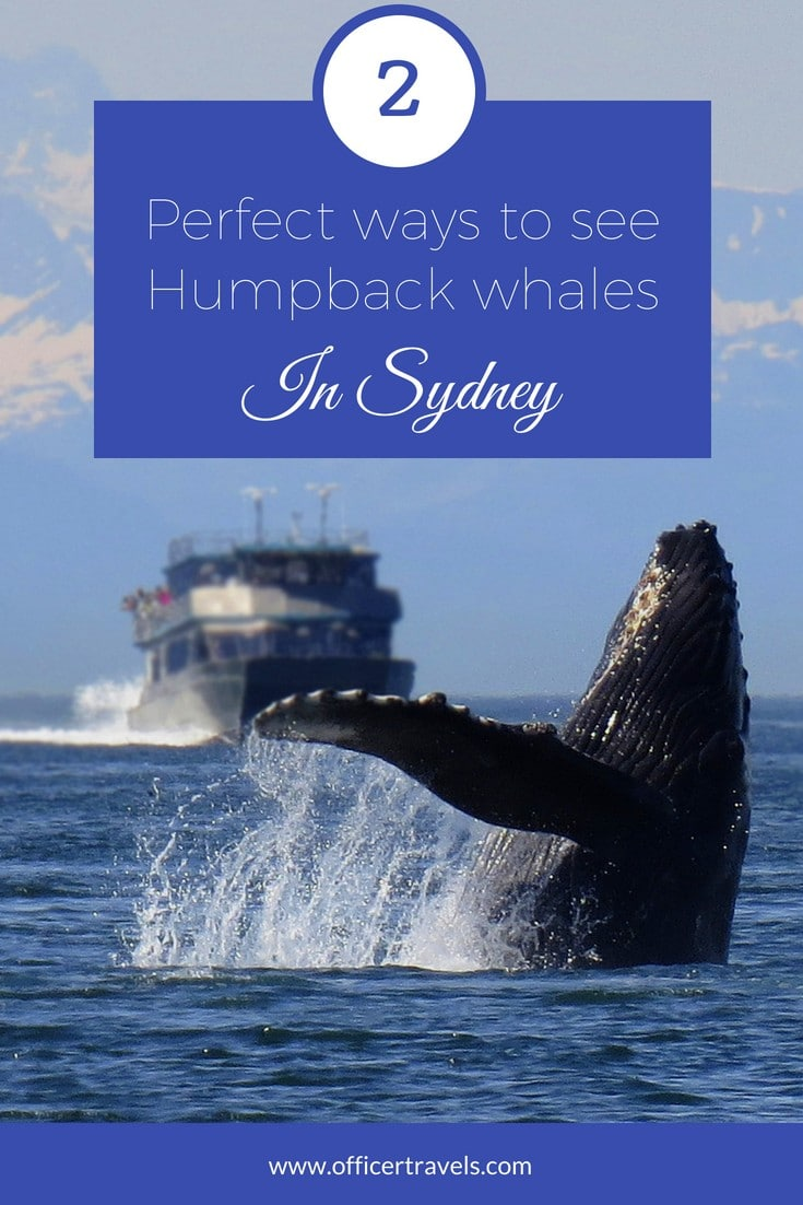 Where can you see whales from Sydney? There are plenty of spots to choose from, and plenty of tours to do. Here are our favourite to make you whale spotting adventure a little easier!! | #whalespotting #whales #sydney #visitnsw #nswtours #ethicaltravel #daytrips