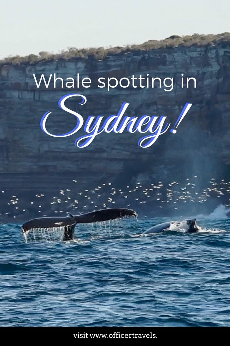 For 5 months of the year, you can spot whales off Australia's east coast - here are our favourite spots to see whales from Sydney! | #whales #whalespotting #seewhales #australia #daytrips #visitaustralia