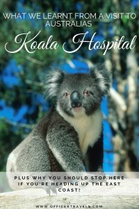 Visiting the koala hospital in port macquarie is a must do activity while road tripping Australia's east coast and here's why! | #visitnsw #nswtips #roadtrip #freethingstodo #koalahospital #budgetfriendly