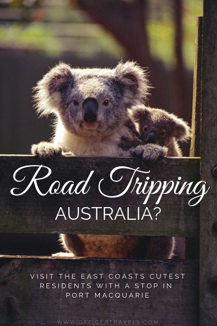 There are so many free things to do along Australias East Coast, the Port Macwauarie Koala Hospital was one of our favourites | #nsw #australia #roadtripaustralia