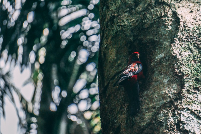 Mount Tamborine National Park wildlife