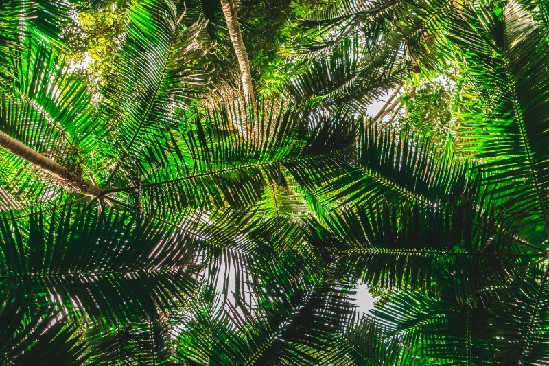 when doing one of the many walking tracks in mount Tambroine National Park, remember to look up!
