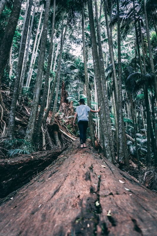 walking tracks in Mount Tamborine lead to amazing adventures in nature