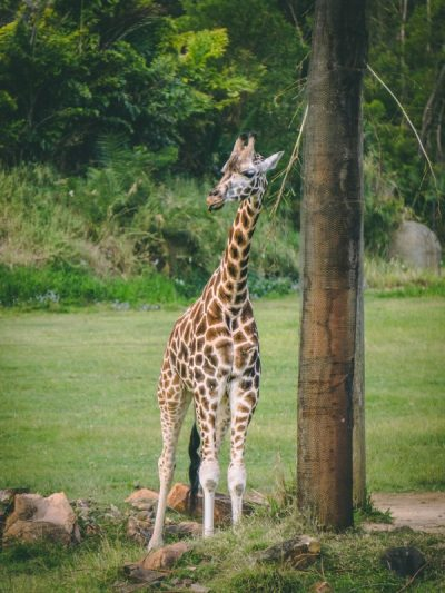 Not sure what to do between Brisbane and Cairns? How about two days at Australia Zoo? Get a taste for the wildlife with this photo dairy | #photos #wildlife #animalphoto #australia #australiazoo #queensland