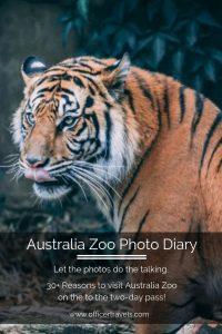 30 reasons why you should do a two day visit to Australia Zoo - a photo dairy | #AustraliaZoo #Tourism #Queenslandtourism #thingstodoinAustralia