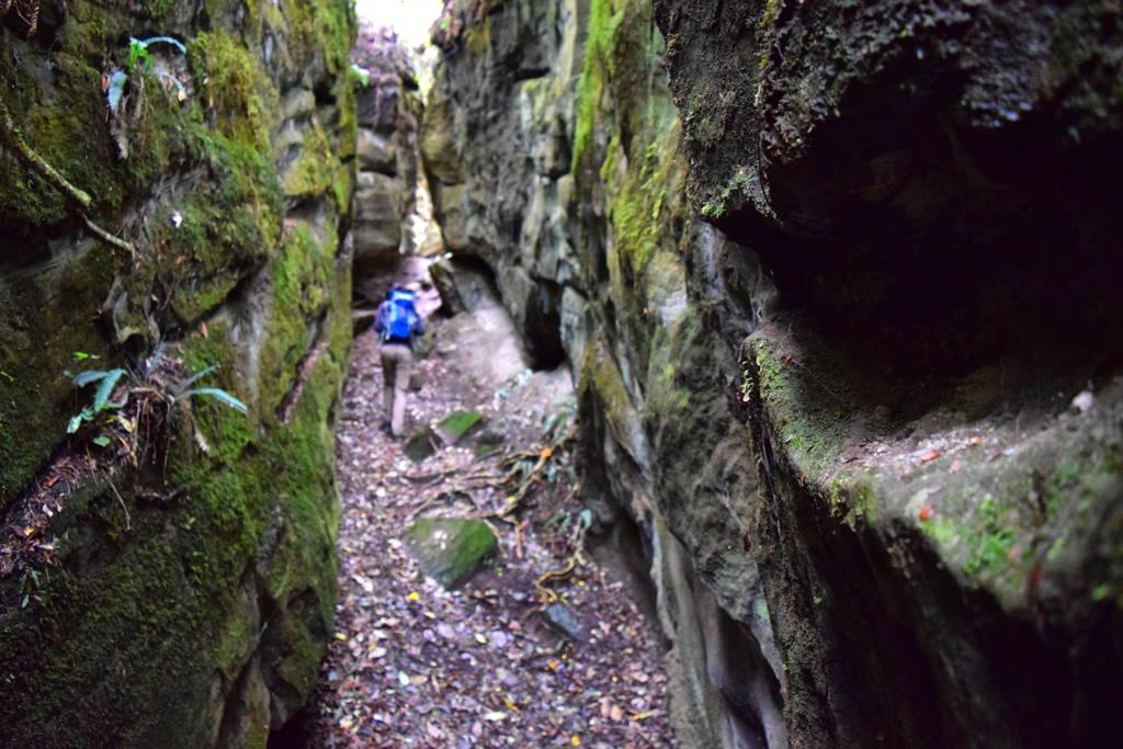 The track leading to caves on one of the alternative short walks around Lake Waikaremoana