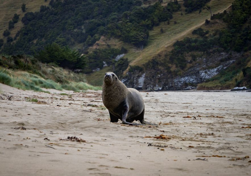 Sea Lions on your road tip through the Catlins