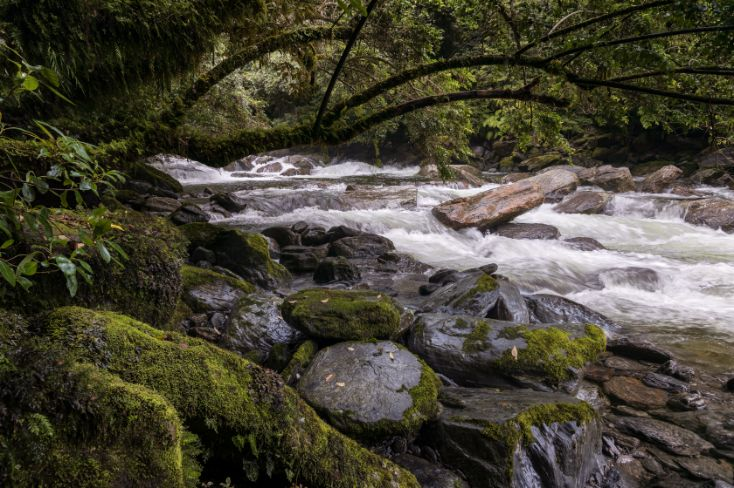 A secret Creek along New Zealand's Haast Pass