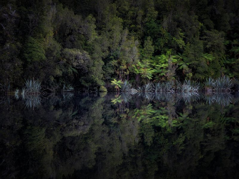 A row of trees at the edge of a lake with perfect reflections in Lake Matheson